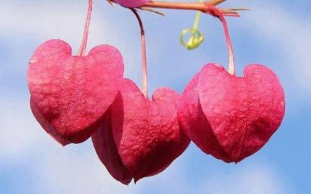 Apakah Hati Kita Sehat?